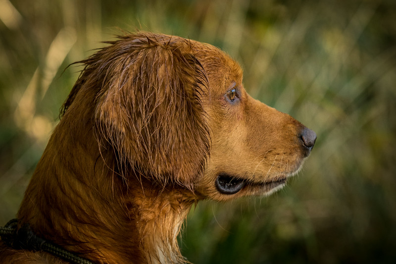 Northwick Estate Spaniel Live Shoot Over Day-58