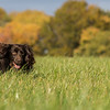Northwick Estate Spaniel Live Shoot Over Day-193