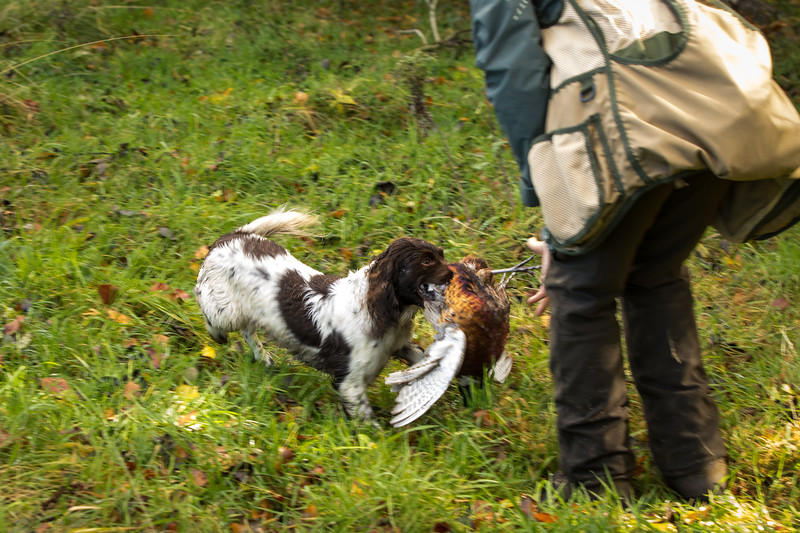 Northwick Estate Spaniel Live Shoot Over Day-172