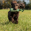 Northwick Estate Spaniel Live Shoot Over Day-207