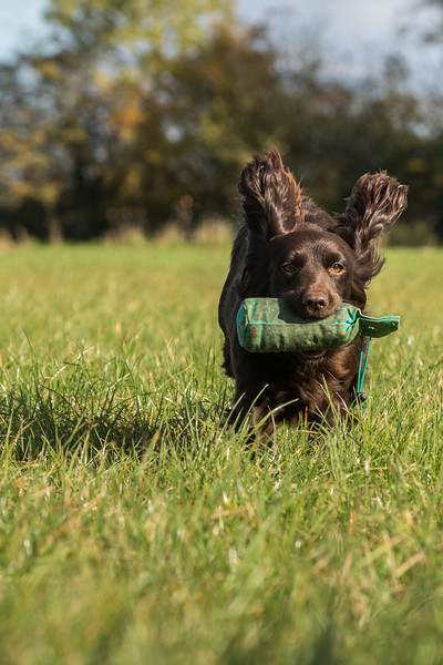 Northwick Estate Spaniel Live Shoot Over Day-206