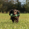 Northwick Estate Spaniel Live Shoot Over Day-203