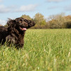 Northwick Estate Spaniel Live Shoot Over Day-184