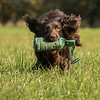 Northwick Estate Spaniel Live Shoot Over Day-205