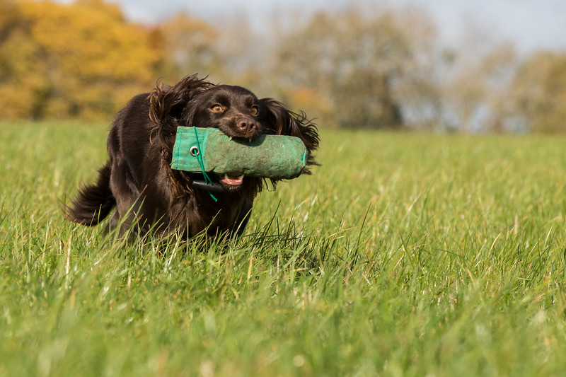 Northwick Estate Spaniel Live Shoot Over Day-192