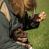 Northwick Estate Spaniel Live Shoot Over Day-145