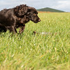 Northwick Estate Spaniel Live Shoot Over Day-178