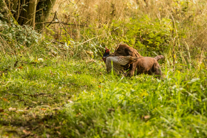 Northwick Estate Spaniel Live Shoot Over Day-161