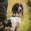 UVWGC AV Spaniel Novice Working Test August 14th At Big Pit