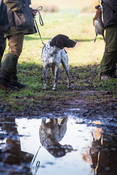 D4Dogs HPR Live Shoot Over Training Day-131