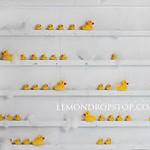 Rubber Ducky shelves
