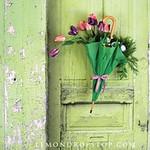 Spring door