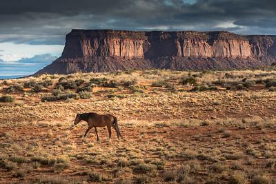 Mustang and a Mesa