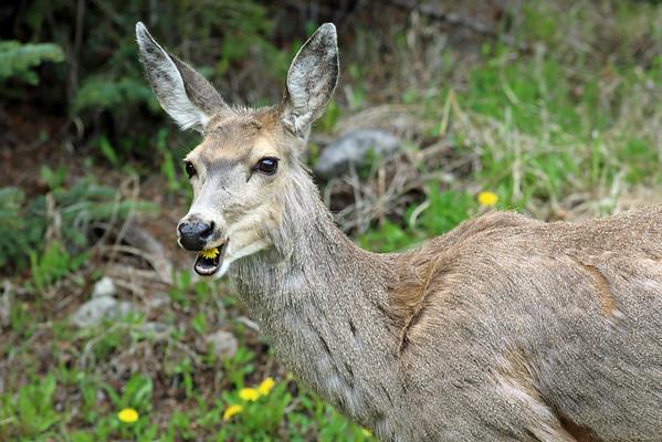 Flower Power Deer