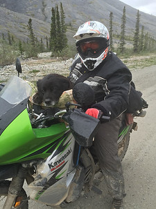 Yes, that's a large and happy dog ... on the Dempster