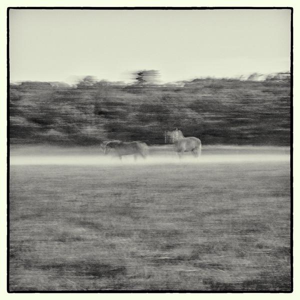 Horses in fog-1