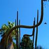 Desert Pipe Organ - Bancroft Garden 92