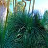Desert Plants - Bancroft Garden 93