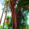 Desert Plants - Bancroft Garden 95