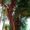 Desert Plants - Bancroft Garden 94