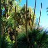 Desert Plants - Bancroft Garden 21