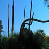 Desert Plants - Bancroft Garden 20