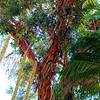 Desert Plants - Bancroft Garden 96