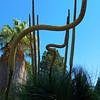 Desert Pipe Organ - Bancroft Garden 91