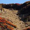 Coastal Ice Plants Path - Pt Reyes 50