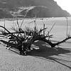 Driftwood BW - Goat Rock Beach 22
