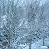 First Snow - Bellevue WA 2