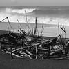 Driftwood BW - Goat Rock Beach 25