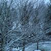 First Snow - Bellevue WA 1