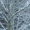 First Snow - Bellevue WA 3