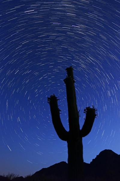 Saguaro Star Trails