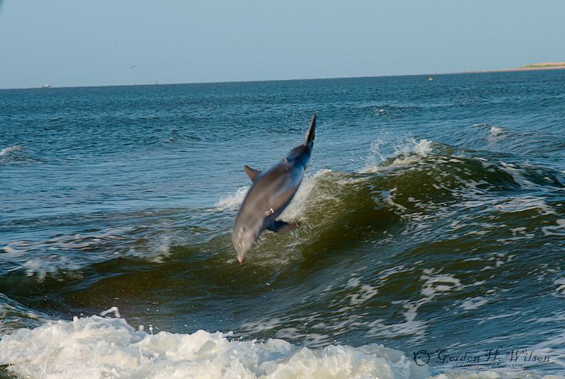 Dolphin cruse out of Tybee