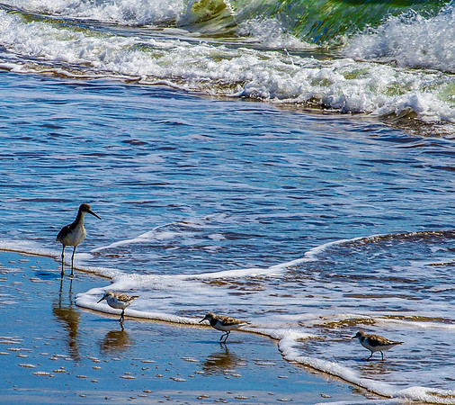 Birds in Surf