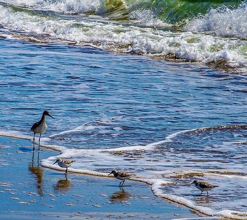 Birds in Surf
