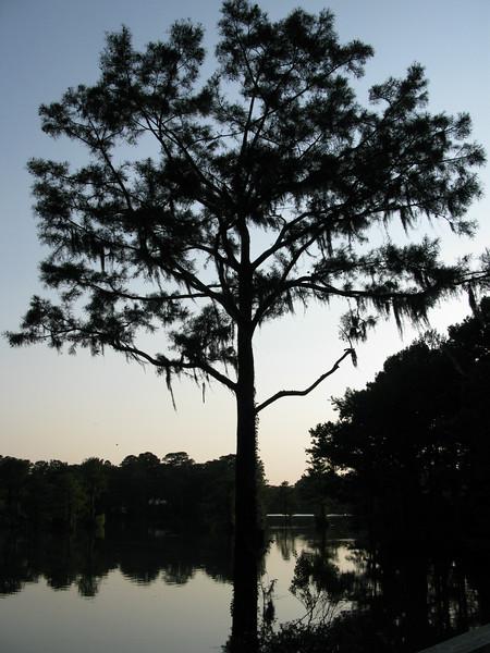 Greenfield Tree