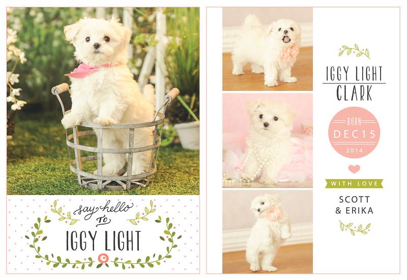 Iggy Light
