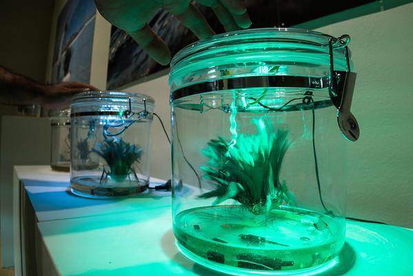 Plantbot by Wendy DesChene & Jeff Schmuki
