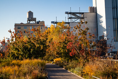 High Line Autumn