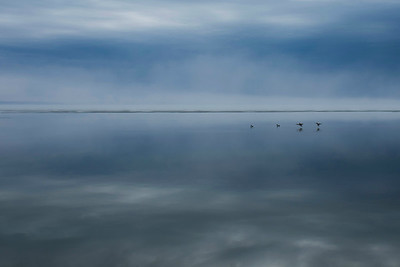 Calm Waters, Calm birds