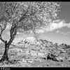 84.  Bethlehem from the south. 1945