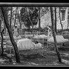 80.  Safad. Baby cots in the hospital pine grove. 1940