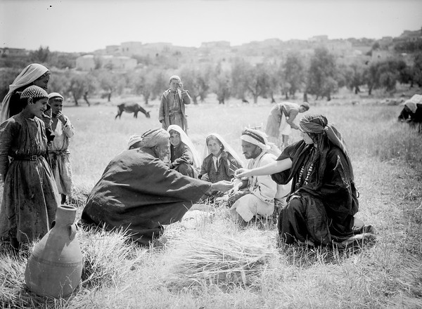 200.  Harvesting at Beit Sahur and Bethlehem. 1898–1946