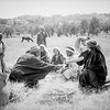 Harvesting at Beit Sahur and Bethlehem. 1898-1946