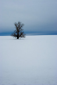 wintertree01