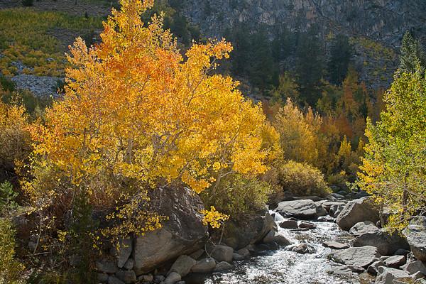 Bishop Creek
