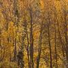 Fall Immersion, Bishop Creek Canyon #0863
